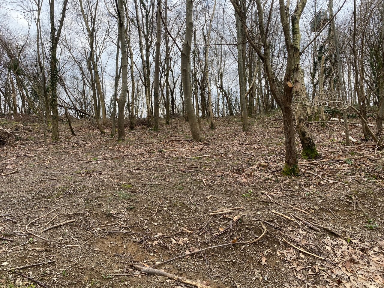 Terreno arbolado en Ventas de Irun.11543 m2.Informate
